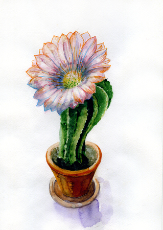 Watercolor picture of cactus flower