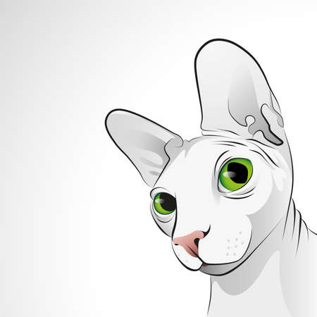 Vector closeup portrait of sphinx cat with big green eyes