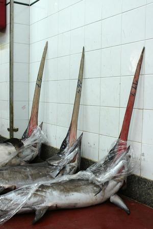 pez espada: mercado de pescado: el pez espada