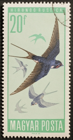 HUNGARY � CIRCA 1966  a stamp printed in Hungary shows image of flying swallows  Hungary, circa 1966