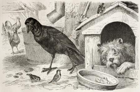 black ancestry: Old illustration of Common Raven (Corvus corax). Created by Kretschmer, published on Merveilles de la Nature, Bailliere et fils, Paris, 1878