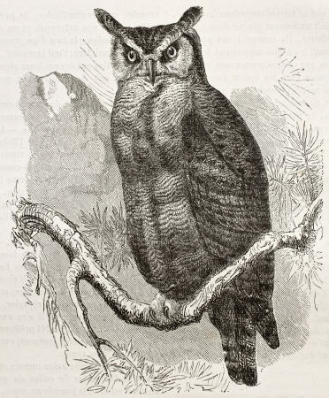 Great Horned-owl old illustration (Bubo virginianus), also known as Tiger Owl. Created by Kretschmer and Jahrmargt, published on Merveilles de la Nature, Bailliere et fils, Paris, 1878 Editorial