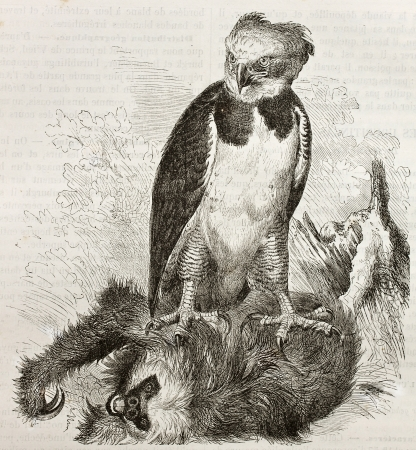Old illustration of Harpy Eagle (Harpia harpyja). Created by Kretschmer, published on Merveilles de la Nature, Bailliere et fils, Paris, 1878
