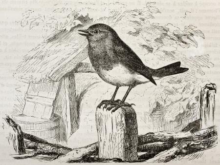 pajaro  dibujo: Robin vieja ilustración (Erithacus rubecula). Creado por Kretschmer y Wendt, publicado en Nature Maravillas de la, Bailliere et Fils, París, 1878 Editorial