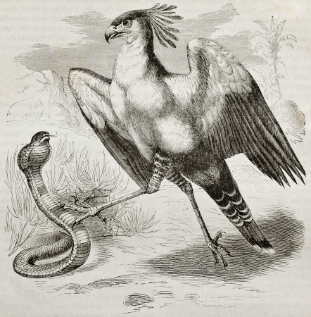 ancient bird: Old illustration of Secretarybird (Sagittarius serpentarius). Created by Kretschmer, published on Merveilles de la Nature, Bailliere et fils, Paris, 1878
