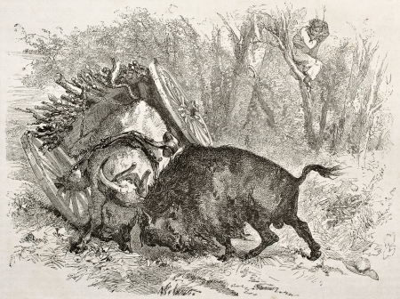 bull fight: Old illustration of a bull fighting against a buffalo. Created by Morin after Palliser, published on Le Tour du Monde, Paris, 1860