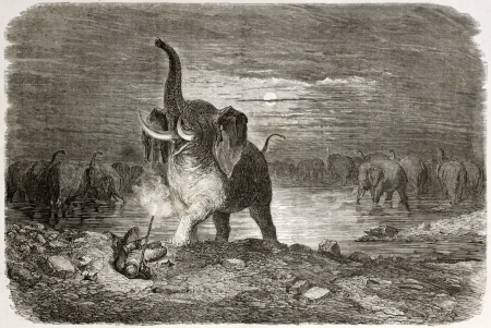 Old illustration of an elephant attacking hunter. Created by Dore after Anderson, published on Le Tour du Monde, Paris, 1860
