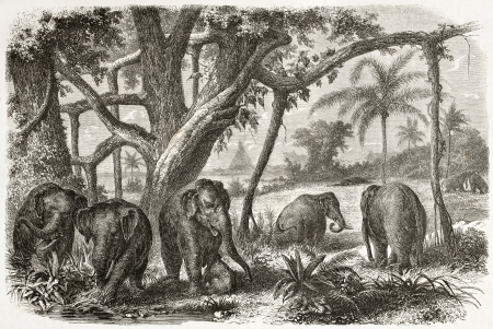 asian ancestry: Old illustration of Elephants herd in Ceylo. Created by Jules Noel, published on Le Tour du Monde, Paris, 1960 Editorial