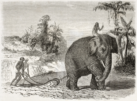 agriculture sri lanka: Elephant ploughing old illustration, Ceylon (nowadays Sri Lanka). Created by Therond and Huyot after Andrasy, published on Le Tour du Monde, Paris, 1860  Editorial
