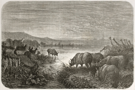 african ancestry: old illustration of watering at African sunset. Created by Dore after Anderson, published on Le Tour du Monde, Paris, 1860