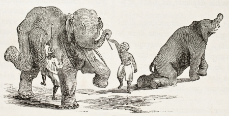 asian ancestry: Elephants dance training. By unidentified author, published on Le Tour du Monde, Paris, 1860