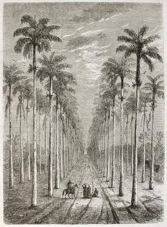 Palm avenue in front of Cuban house. Created by Berard, published on Le Tour du Monde, Paris, 1860.
