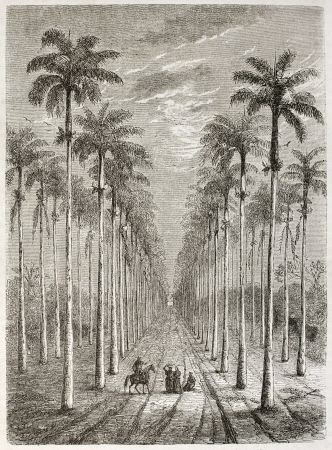 old fashioned sepia: Palm avenue in front of Cuban house. Created by Berard, published on Le Tour du Monde, Paris, 1860.