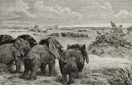 white nile: Antigua ilustraci�n de los elefantes pastan reba�os en los pastizales cerca del Nilo Blanco. Creado por Zwecker, publicado en Le Tour du Monde, Par�s, 1864 Editorial