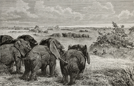 Old illustration of elephants herds grazing in pasturelands near white Nile. Created by Zwecker, published on Le Tour du Monde, Paris, 1864