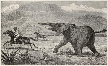 pursuing: Wounded elephant pursuing British explorer Samuel Baker. Created by Neuville, published on Le Tour du Monde, Paris, 1867 Editorial