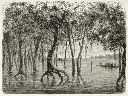 amazonas: Amazonas flooding forest old illustration. Created by Riou, published on Le Tour du Monde, Paris, 1867