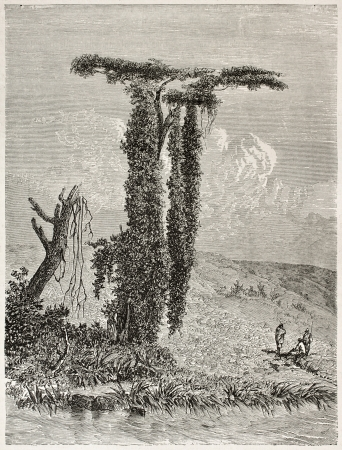 african ancestry: Lisara river bank old view, Abyssinia. Created by Ciceri after Lejean, published on Le Tour du Monde, Paris, 1867