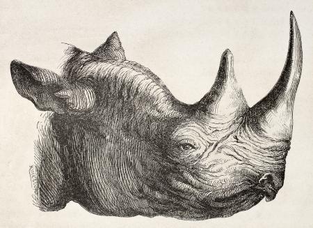 Rhynoceros head old illustration. By unidentified author, published on Le Tour du Monde, Paris, 1867