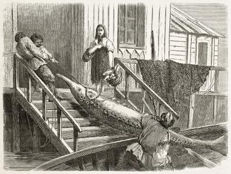 pecheur: Pêche à l'esturgeon: faire glisser le poisson dans une banque de la Volga. Créé par Moynet, publié sur Le Tour du Monde, Paris, 1867 Éditoriale