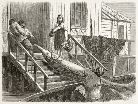 dragging: Sturgeon fishing: dragging fish in Volgas bank. Created by Moynet, published on Le Tour du Monde, Paris, 1867