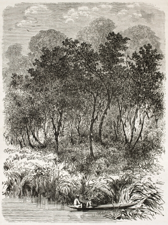 Theobroma cacao wild trees old illustration, Brazil. Created by Riou, published on Le Tour du Monde, Paris, 1867