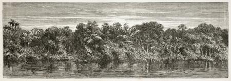 rio amazonas: Virgen bosque en Amazon orilla del r�o. Creado por Riou y Laplante, publicado en Le Tour du Monde, Par�s, 1867