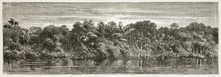 river bank: Virgin forest on Amazon river bank. Created by Riou and Laplante, published on Le Tour du Monde, Paris, 1867