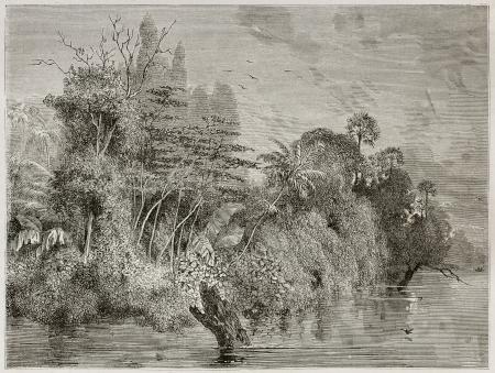 amazonas: Vegetation along Amazon river channels. Created by Riou, published on Le Tour du Monde, Paris, 1867 Editorial