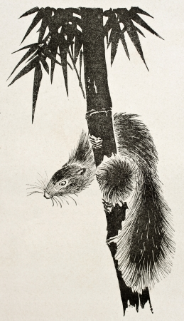climbed: Badger on bamboo, old stylized illustration. Created by Rapine after old Japanese engraving by unknown author, published on Le Tour Du Monde, Ed. Hachette, Paris, 1867 Editorial