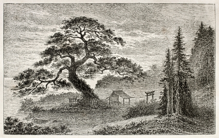 cedar tree: Holy Cedar in Yedo (Tokyo) suburb, old view. Created by Lancelot after Japanese engraving by unknown author, published on Le Tour Du Monde, Ed. Hachette, Paris, 1867 Editorial