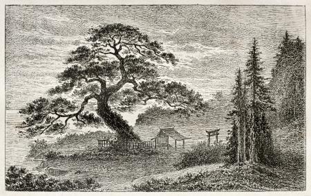a cedar: Santo Cedar en Yedo (Tokio) arrabal, antiguo punto de vista. Creado por Lancelot después de grabado japonés de autor anónimo, publicado en Le Tour Du Monde, Ed. Hachette, Paris, 1867