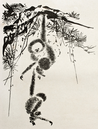 black ancestry: Monkeys among branches, old stylized illustration. Created by Rapine after old Japanese engraving by unknown author, published on Le Tour Du Monde, Ed. Hachette, Paris, 1867