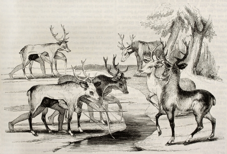 gimmick: Native Americans camouflage hunting deers in Florida. By unidentified author, published on Magasin Pittoresque, Paris, 1842 Editorial