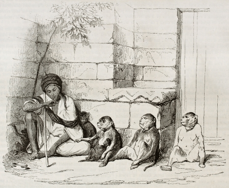 ancestry: Monkeys merchant old illustration. Created by Girardet, published on Magasin Pittoresque, Paris, 1844 Editorial