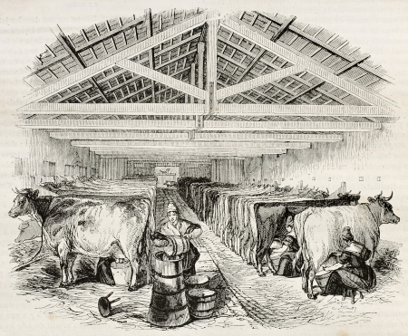 dairy farm: Stable old illustration. By unidentified author, published on Magasin Pittoresque, Paris, 1844 Editorial