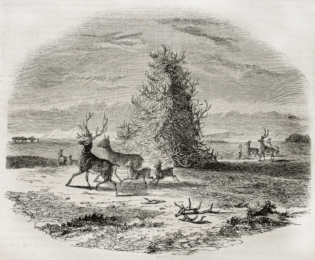 hunters tower: Deer antler pile old illustration, Missouri (native Americans tradition). Created by Gowland, published on Magasin Pittoresque, Paris, 1845 Editorial