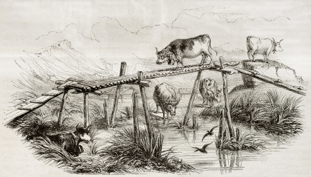 Old illustration of cows in Maringen pastureland, Switzerland, canton of Berne. Created by Varim and Lavielle, published on Magasin Pittoresque, Paris, 1850