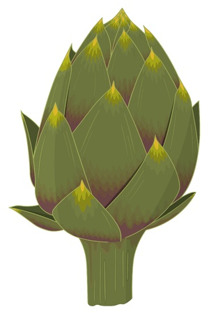 greengrocer: the king of vegetables: realistic isolated artichoke illustration  Illustration