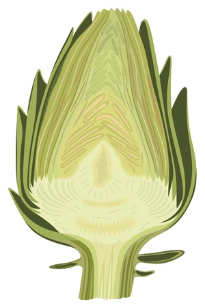 Halved artichoke isolated