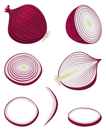 cebolla roja: Cebolla roja, reducido a la mitad entera y en rodajas Vectores