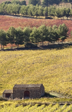 abandoned farmhouse abandoned farmhouse: Hilly autumn landscape in Sicily