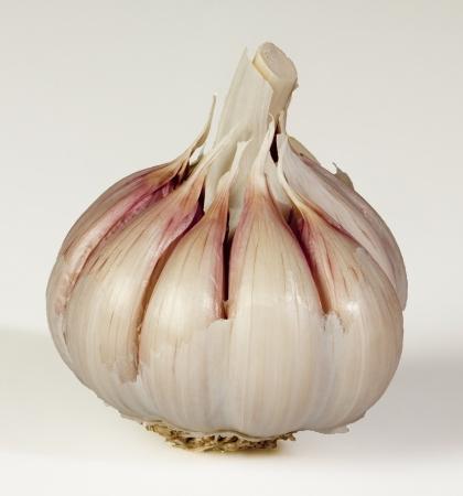 Head of garlic on white background Stock Photo - 18257980