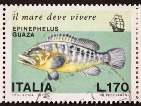 epinephelus: ITALY � CIRCA 1978: a stamp printed in Italy shows image of Dusky Grouper  (Epinephelus marginatus or Epinephelus guaza). Italy, circa 1978