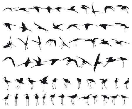 wade: Sixty Black-winged Stilts flying and standing black silhouettes