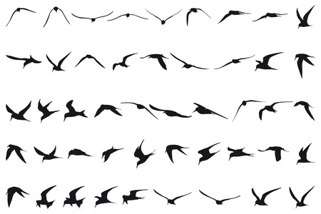 wade: Forty-seven Little Terns flying black silhouettes