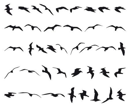 gaviota: Cuarenta gaviotas volando siluetas negras