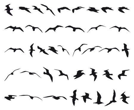 water birds: Forty seagulls flying black silhouettes