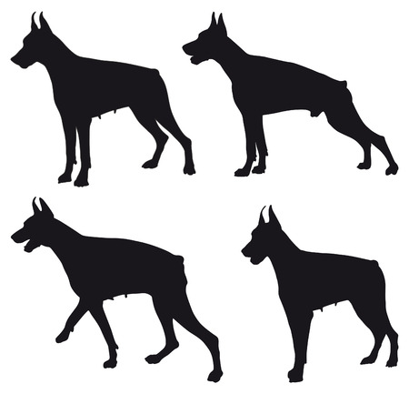 dog outline: Doberman four different black silhouettes