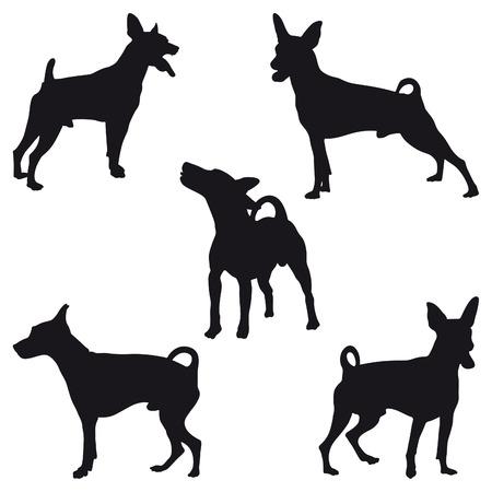 miniature breed: Cinco siluetas negras Pinscher miniatura